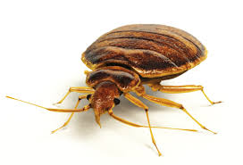 Bed Bug Removal Edinburgh