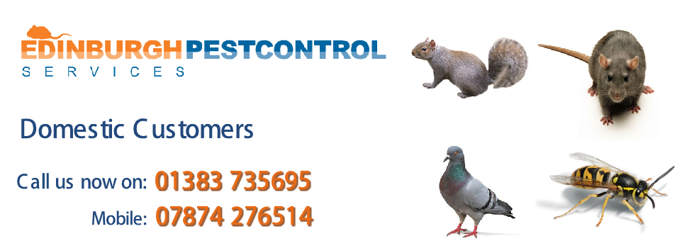Pest Control North Queensferry