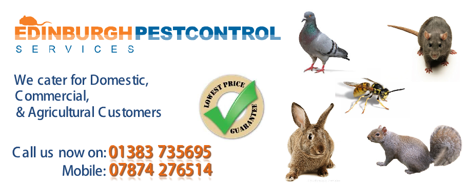 pest-control-edinburgh-s1