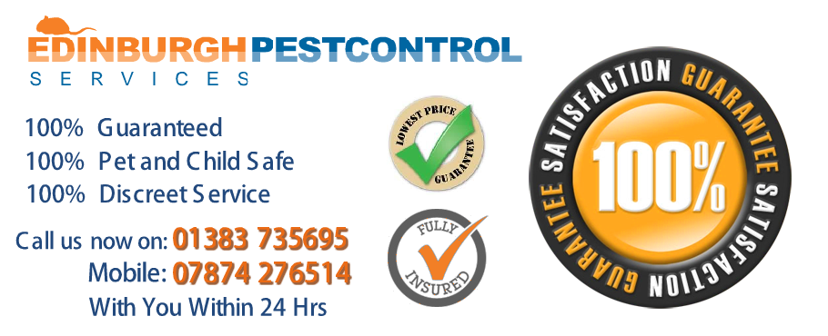 pest-control-edinburgh-slider-31